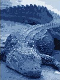 blue gator